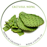nopalin_cactus
